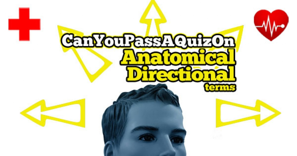 Anatomical directional terms quiz