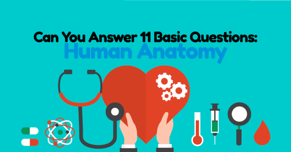 Quizwow Can You Answer 11 Basic Human Anatomy Questions